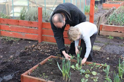 Moss Side Community Allotment