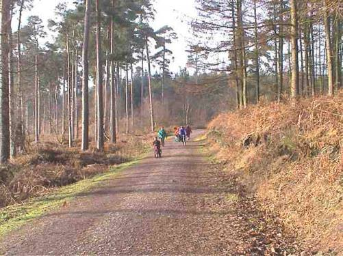 Delamere Forest Outdoor Centre