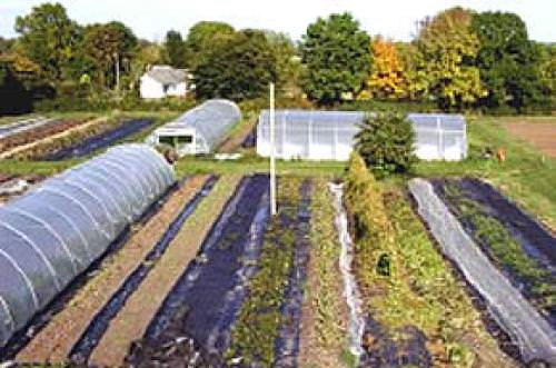 Gold Hill Organic Farm
