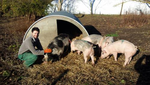 Rushall Organic Farm - John Simonds Trust