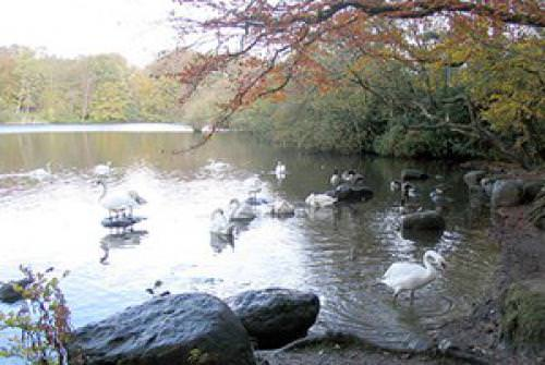 Bolam Lake Country Park