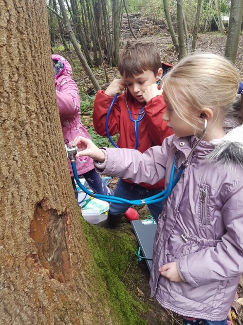 CASE STUDY: Future foresters?