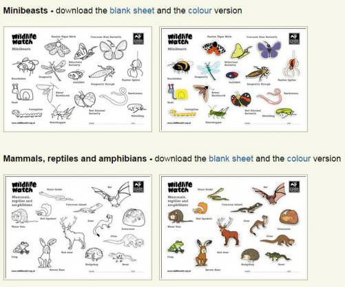 Wildlife Colouring Sheets Teaching Resources Countryside Classroomrhcountrysideclassroomorguk: Coloring Sheets For Bird Watching At Baymontmadison.com