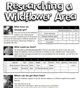 Researching a wild flower area