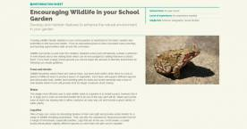 Encouraging wildlife in your school garden
