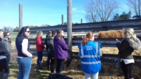 Teacher Training - Farm Visits Online Workshop