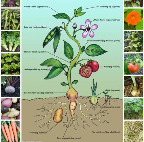 Organic Gardening Posters
