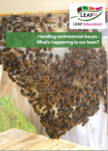 What's happening to our bees?