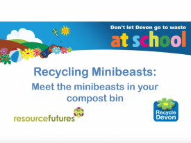 Recycling minibeasts video