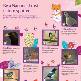Nature spotter sheets birds