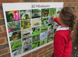 30 Minibeasts- Photographic - 3109